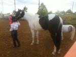 Moons R Eternal - Paint horse (10 Jahre)