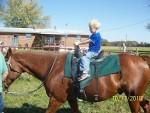 Sleepy - Männlich Quarter Horse (17 Jahre)