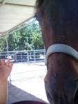 Hanna - Connemara Pony (7 Jahre)