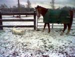 My horse April - (20 Jahre)