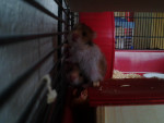 Hamsterbaby's ( selbst gezüchtet ) - ??? (3 Jahre)