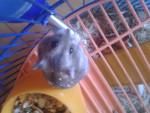 Dafne - Hamster (3 Monate)