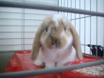 Nougat - Hase (2 Monate)