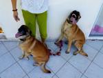 Hund Zya et Rex -  (0 Monate)