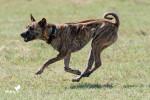 Zyra - Hund
