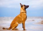 Hund Bild