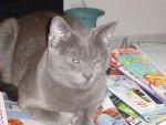 Inconnu - Katze