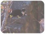 Épi - Männlich Katze (3 Jahre)
