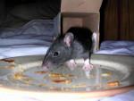 Golem finit les assiettes - Maus