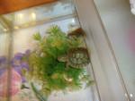 perlita y david - Schildkröte (3 Jahre)
